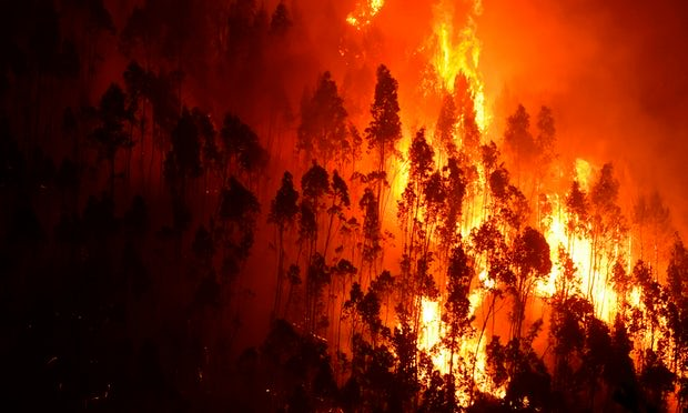 A forest in flames near the village of Mega Fundeira in Portugal