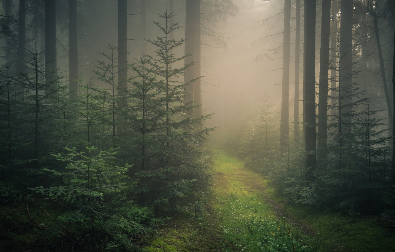black-forest-baden-wurttemberg-germany-shvartsvald-baden-viu
